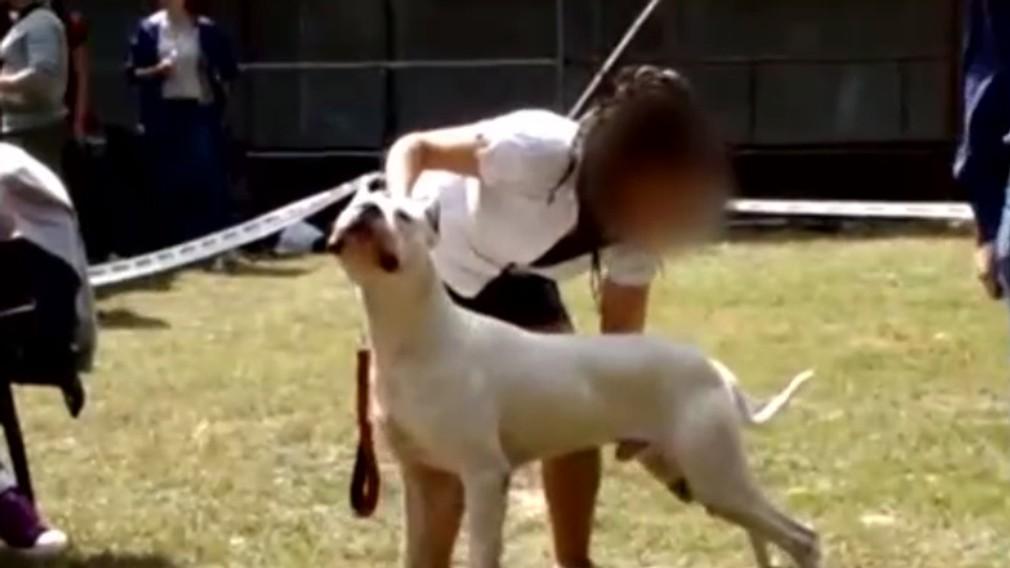 Vandal sa konečne vrátil domov. Súd o psovi rozhodoval takmer tri roky