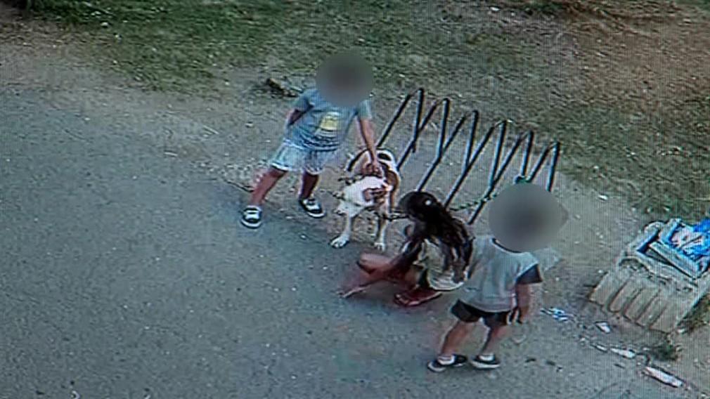 VIDEO: V Snine dohrýzol pes 13-ročného chlapca3439