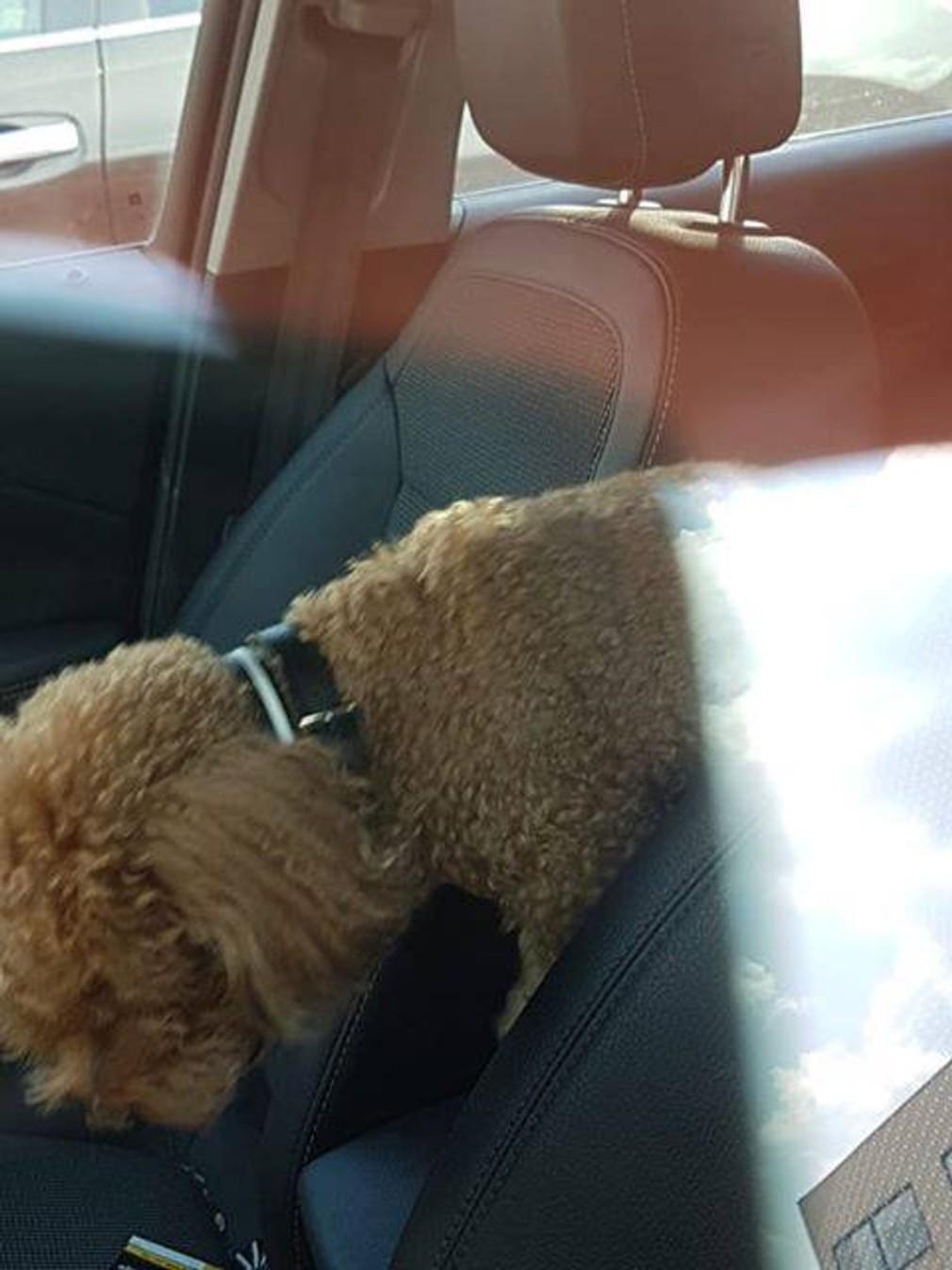 Prvý prípad sezóny v Petržalke. Majiteľka nechala psa v horúcom aute a šla nakupovať