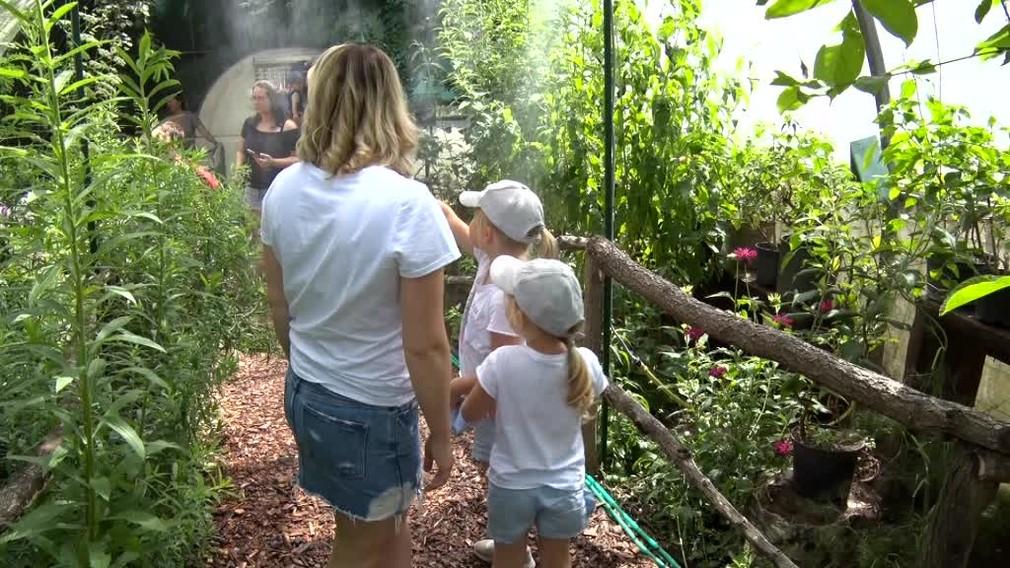 Tisíce motýľov na jednom mieste. Bojnická Zoo ponúka návštevníkom jedinečný zážitok