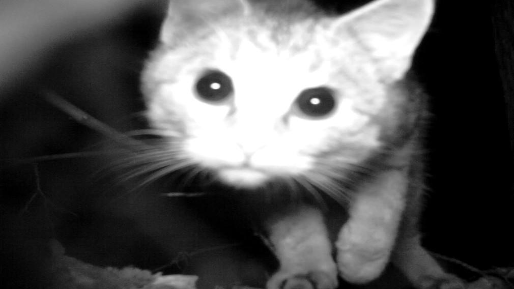 zvieratá, fotopasca