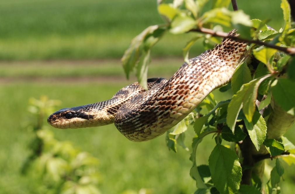 Nový druh hada