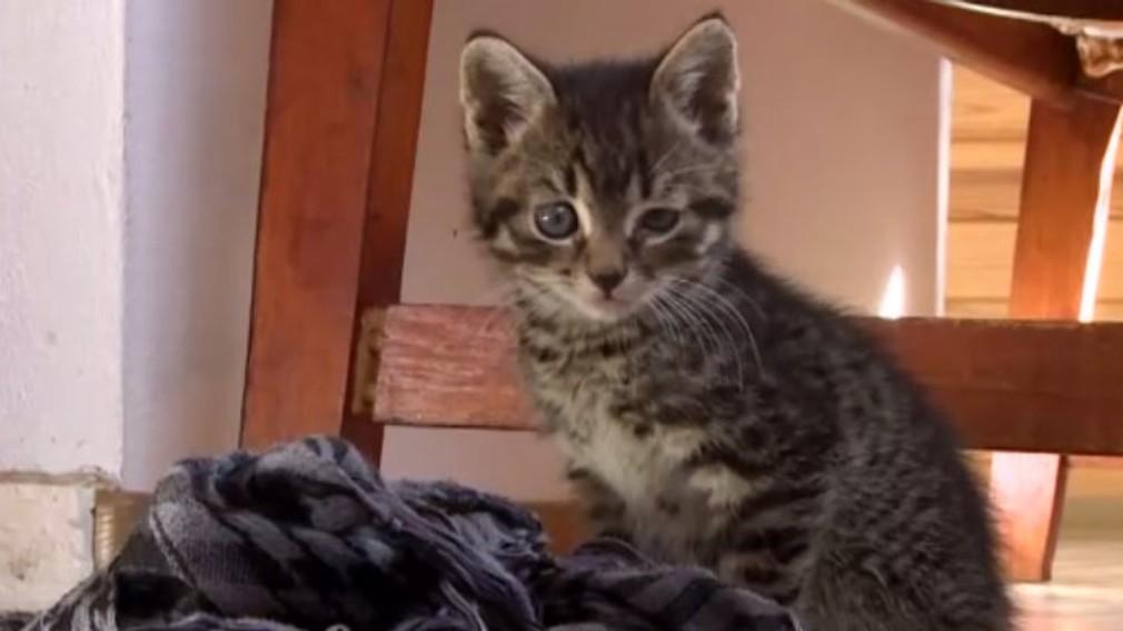 Na sídlisku v Čadci niekto pravdepodobne dokopal malú mačku, nejde o jediný útok na zviera