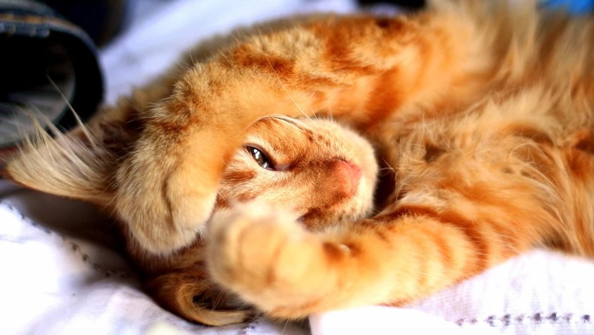 Nahé mačička pic