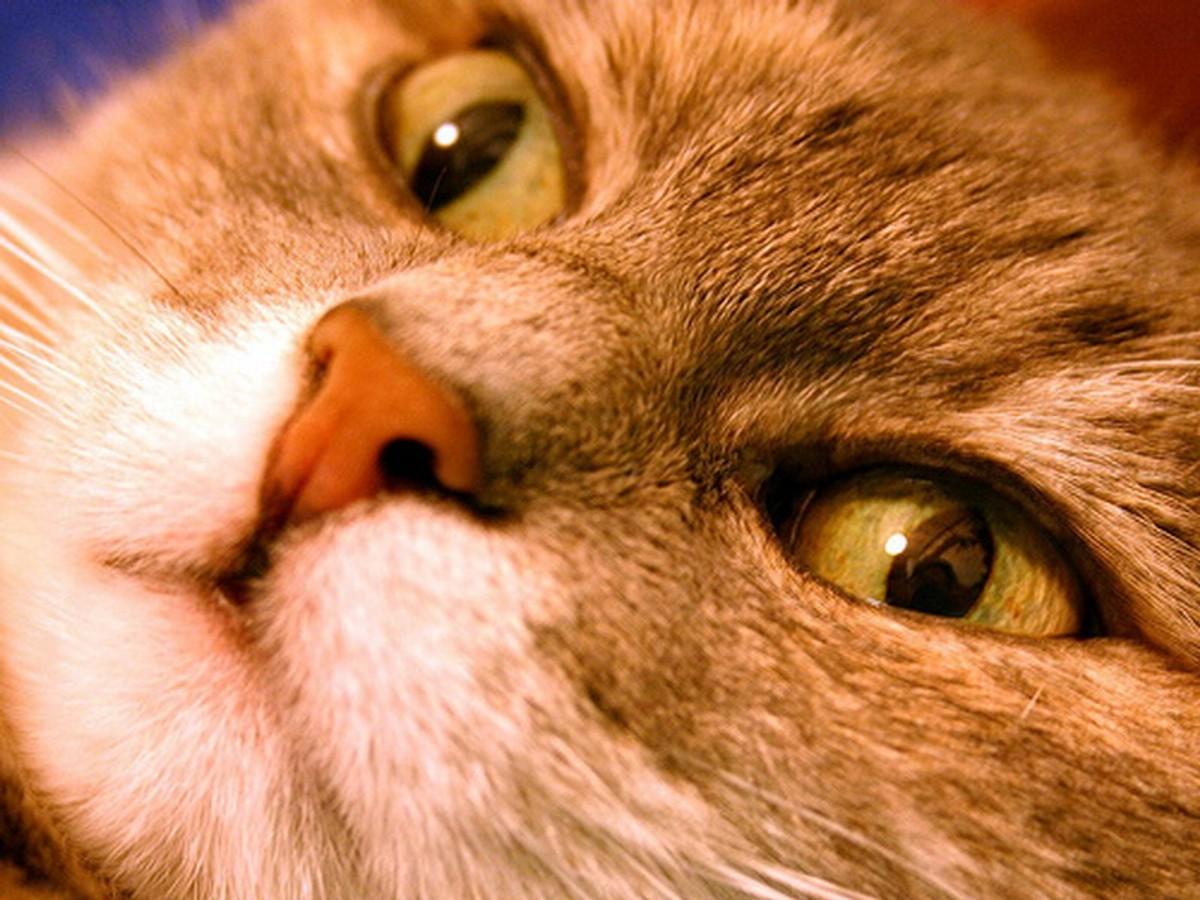 18 mačička zadok