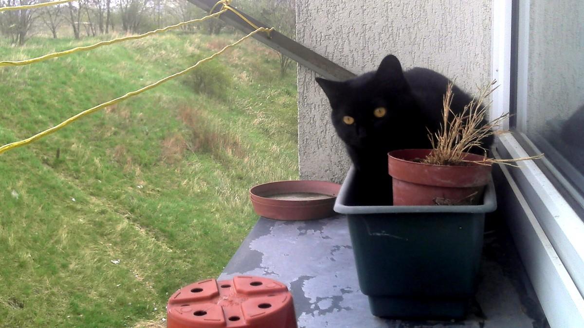 Čierna mačička fotogalérie