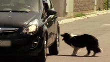 Čierna bradavky a mačička