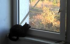 čierna mačička video zadarmo