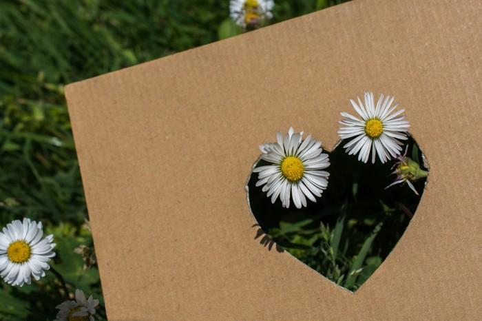 Nová záhrada - kartón