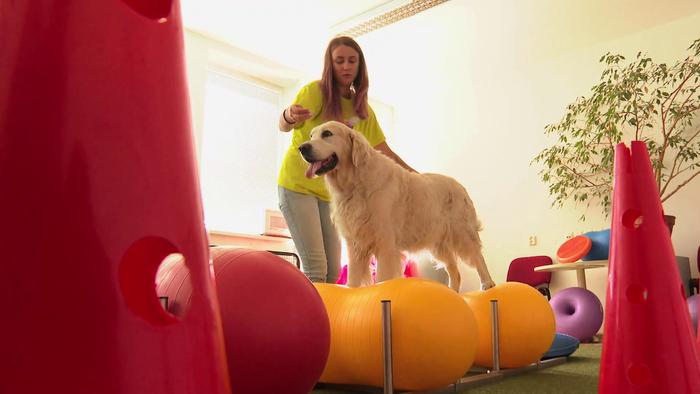 Dog fitness výrazne pomáha kondícii a zdravotnému stavu psa