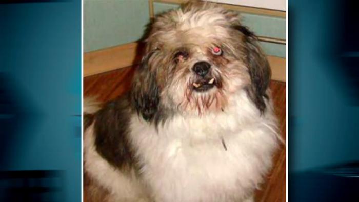 Pes Dominiky Kavaschovej, ktorý sa dožil 16 rokov