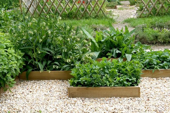 Nová záhrada - bylinky v lete