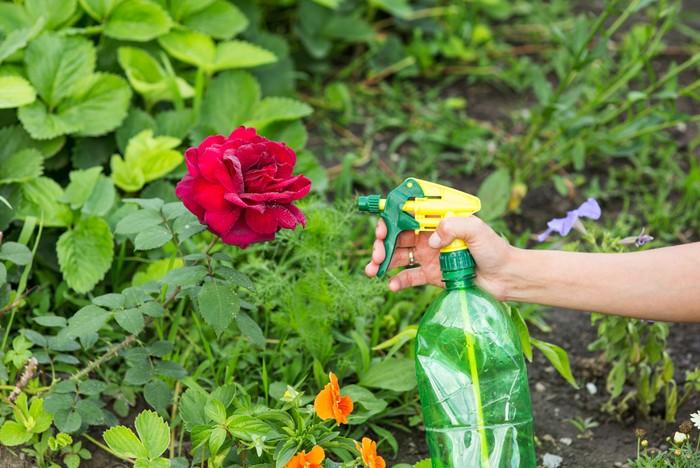 Nová záhrada - vošky