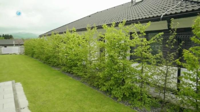 Nová záhrada - hraby