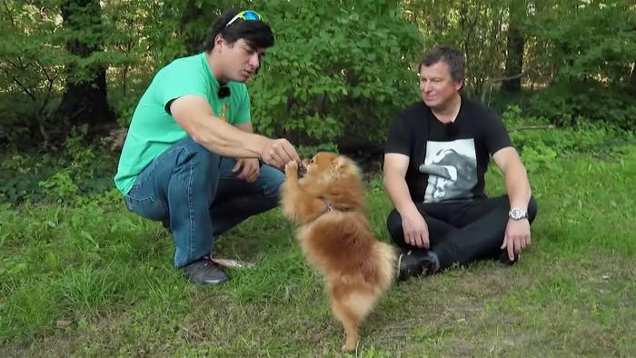 Miláčikovo - Psa naučíme povelu sadni si aj bez slov