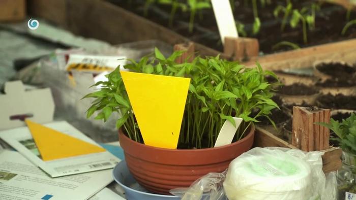 Nová záhrada - lepové dosky