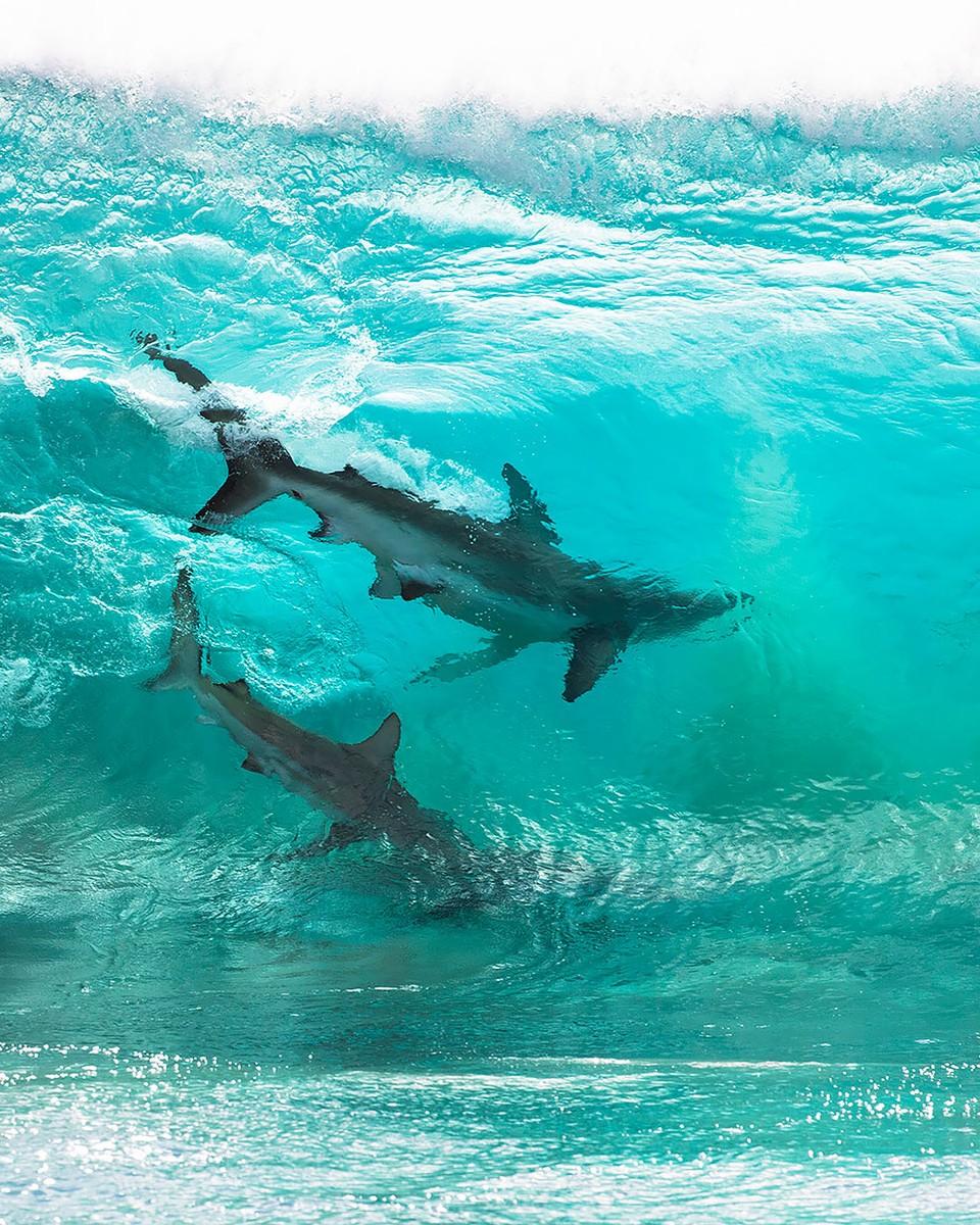 Žraloky vo vlnách