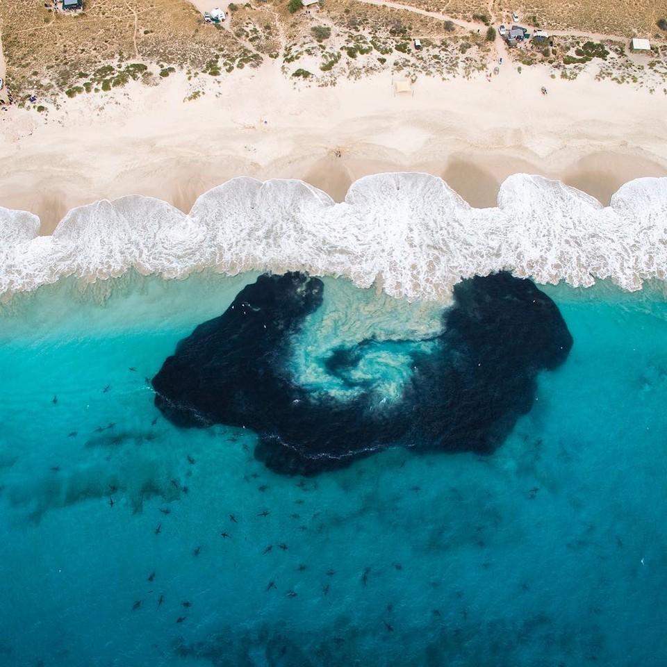 Húf žralokov pri austrálskom pobreží