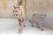 Puma Mia rastie 6