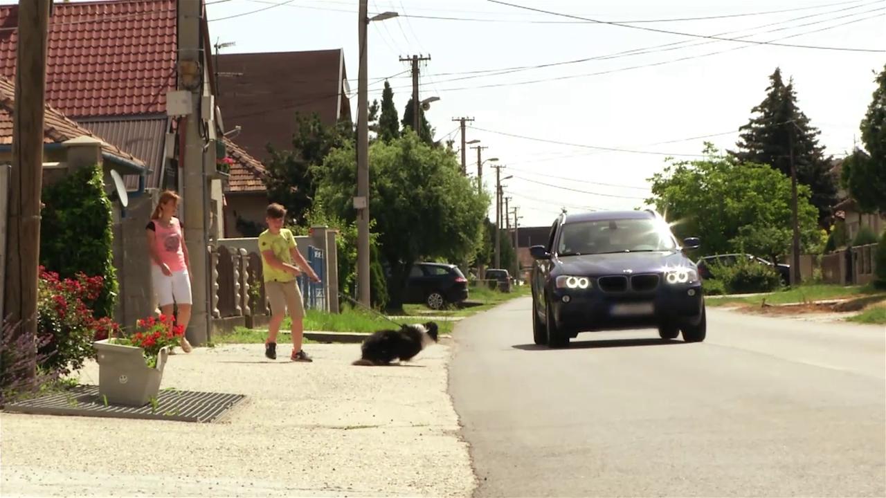 Miláčikovo - Roxy má veľmi rada autá a vrhá sa pred ne