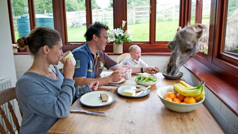 Rodinka pri raňajkách_radosť_ťava