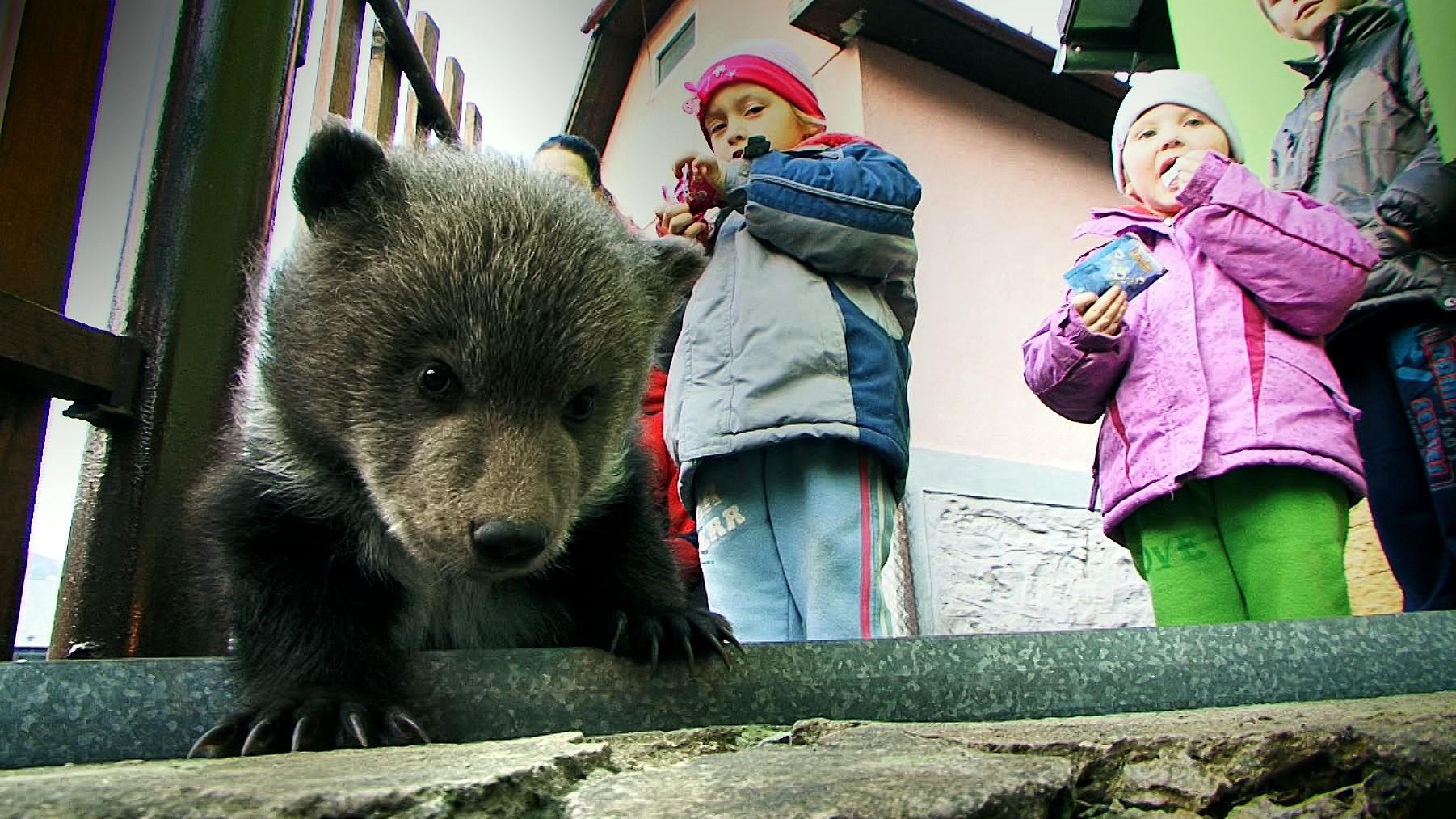21.03.2014 Slovensko · Zatúlaný medvedík spadol do potoka e332dbaae0a