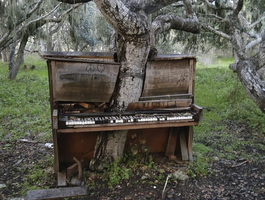 Piano preprastené stromom