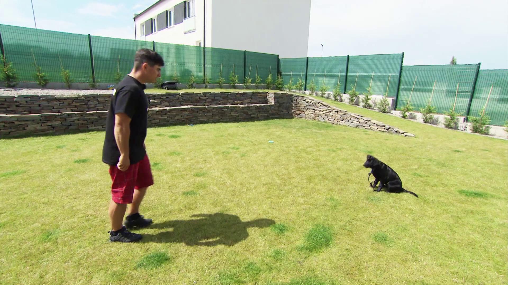 Psovi musíme dať jasne najavo, že nesmie cikať na trávniku