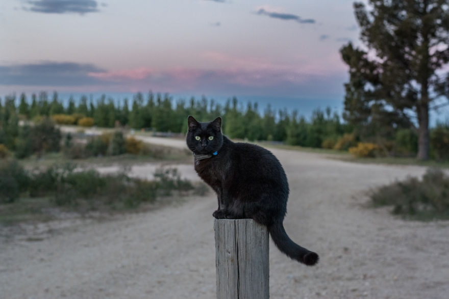 Mačička v Afrike