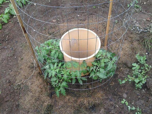 Veľkosť sadeníc 28. mája