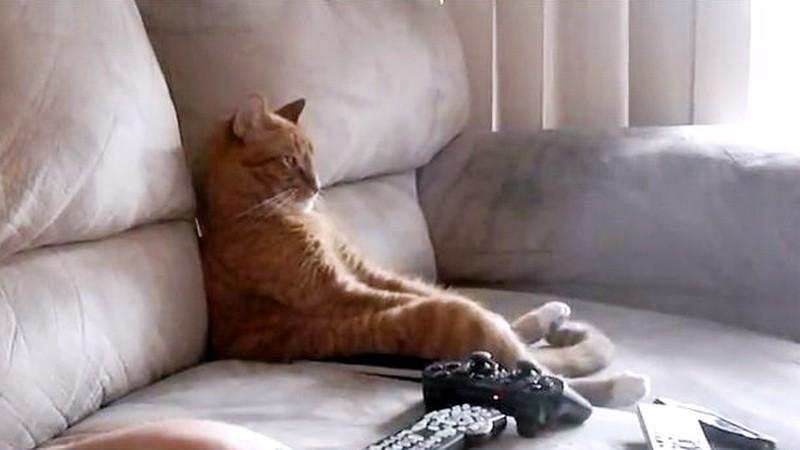 čierny sex mačička video