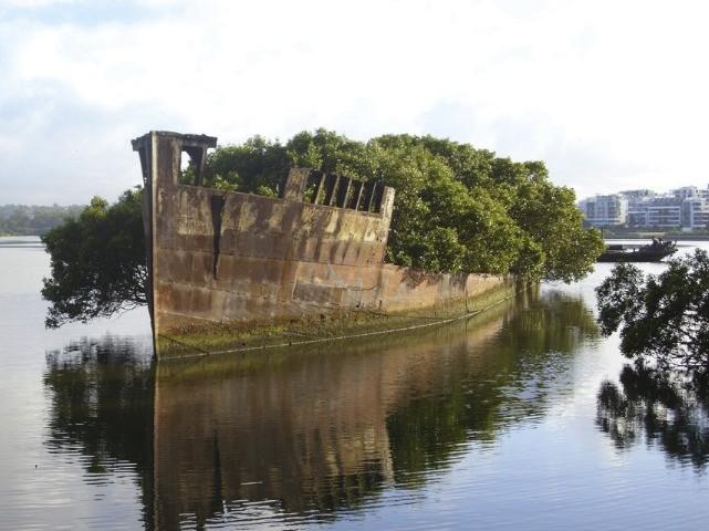 Vrak, ktorý zrástol s okolím v Sydney