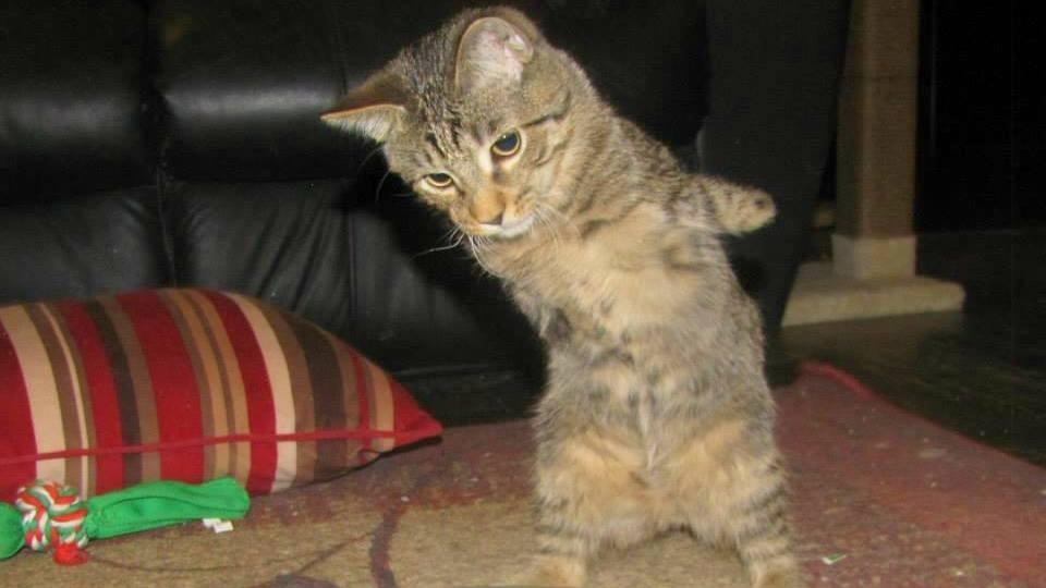 Nahé mačička Picz