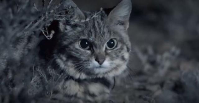 Mladý tesný mačička