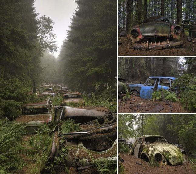 Belgické vrakovisko, z ktorého sa stal les