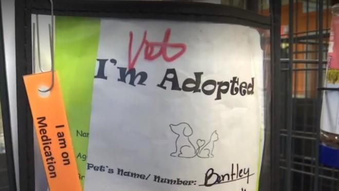 99c80eb3e 11.05.2019 Zaujímavosti · Na trojročné dievča zaútočil túlavý pes.  Zachránil ju nečakaný hrdina