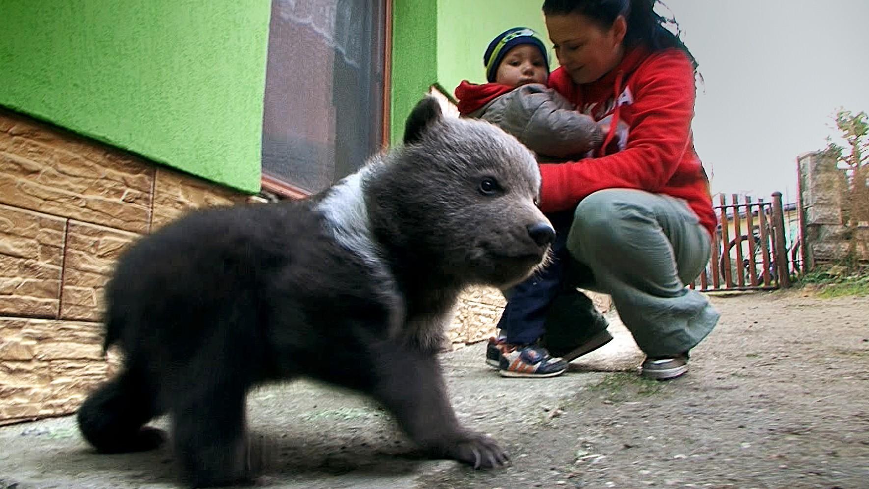 Príbeh zachráneného medvedíka Miša má šťastný koniec 38fa631da2d